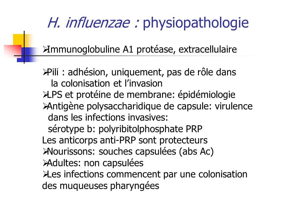 H. influenzae : physiopathologie Immunoglobuline A1 protéase, extracellulaire Pili : adhésion, uniquement, pas de rôle dans la colonisation et linvasi