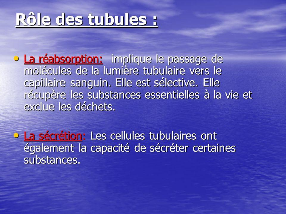 Rôle des tubules : Rôle des tubules : La réabsorption: implique le passage de molécules de la lumière tubulaire vers le capillaire sanguin. Elle est s