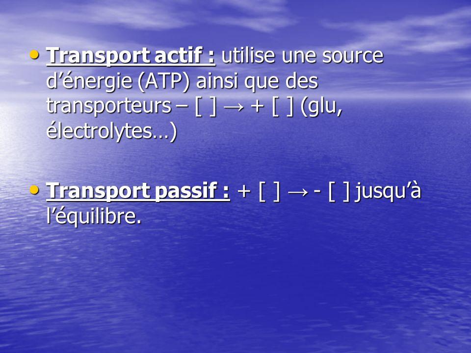 Transport actif : utilise une source dénergie (ATP) ainsi que des transporteurs – [ ] + [ ] (glu, électrolytes…) Transport actif : utilise une source