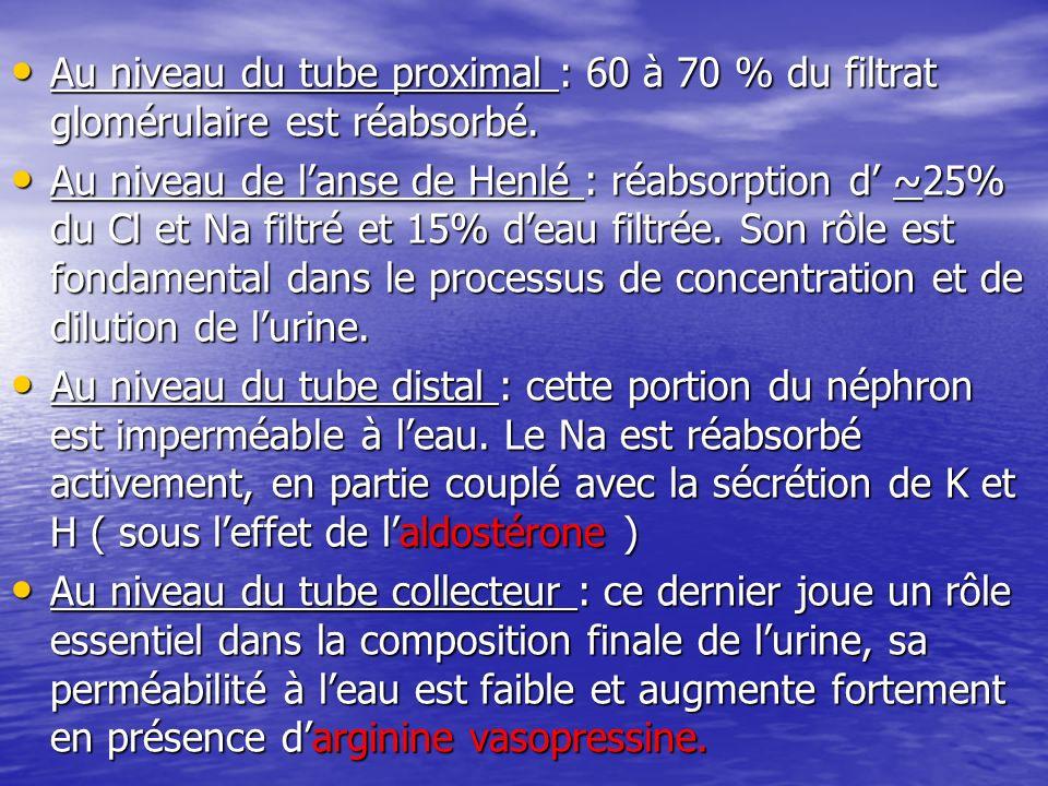Au niveau du tube proximal : 60 à 70 % du filtrat glomérulaire est réabsorbé. Au niveau du tube proximal : 60 à 70 % du filtrat glomérulaire est réabs