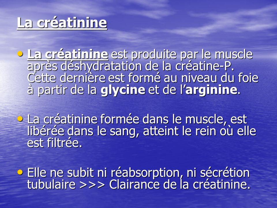 La créatinine La créatinine est produite par le muscle après déshydratation de la créatine-P. Cette dernière est formé au niveau du foie à partir de l