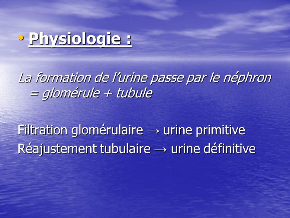 Physiologie : Physiologie : La formation de lurine passe par le néphron = glomérule + tubule Filtration glomérulaire urine primitive Réajustement tubu
