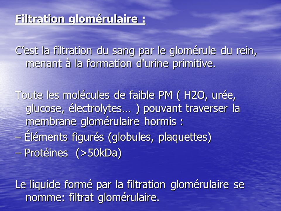 Filtration glomérulaire : Cest la filtration du sang par le glomérule du rein, menant à la formation d'urine primitive. Toute les molécules de faible
