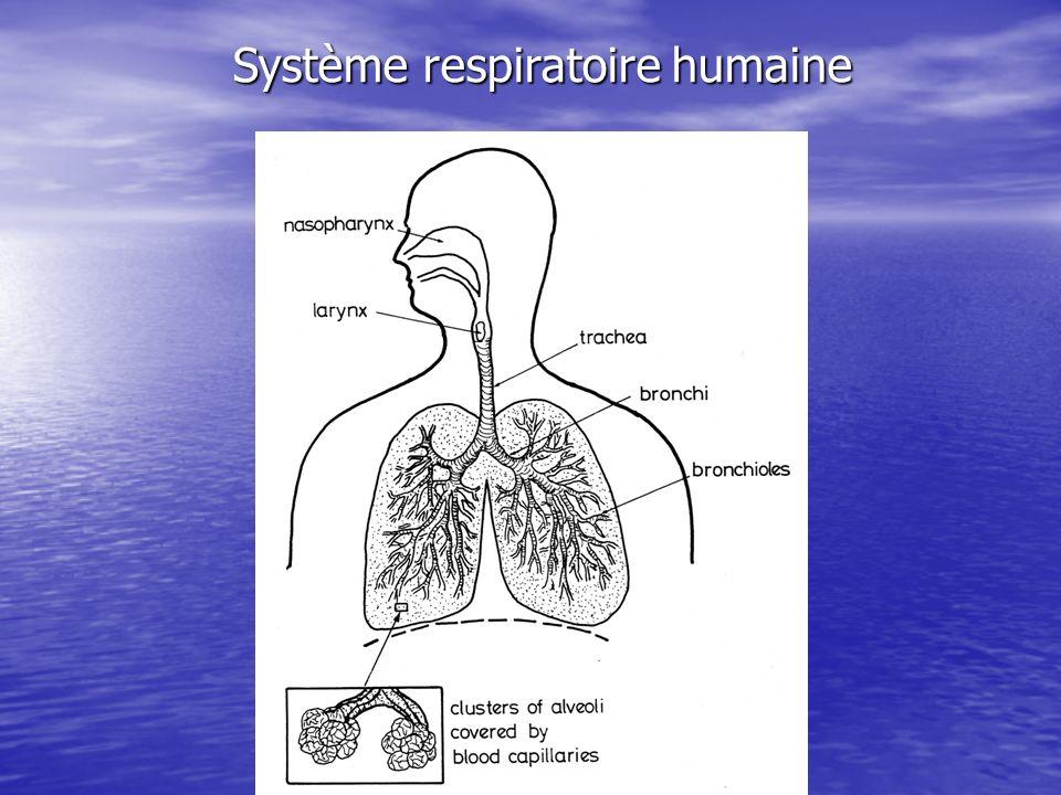 Poussières Les particules grossières, de diamètre > 10 μm narrivent pas jusqu aux poumons, mais sont arrêtées soit par les poils du nez, soit par les cils vibratiles; Les particules grossières, de diamètre > 10 μm narrivent pas jusqu aux poumons, mais sont arrêtées soit par les poils du nez, soit par les cils vibratiles; Les particules fines, de diamètre < 10 μm, se rendent jusqu aux poumons (au niveau alvéolaire), une partie de celles-ci s y déposant, l autre partie étant exhalée lors de la vidange des poumons Les particules fines, de diamètre < 10 μm, se rendent jusqu aux poumons (au niveau alvéolaire), une partie de celles-ci s y déposant, l autre partie étant exhalée lors de la vidange des poumons –Les particules inférieures à 0.1 μm ne se déposent jamais car elles se déplacent comme des molécules de gaz, obéissant au mouvement brownien –La rétention maximale des poussières par les alvéoles concerne principalement les particules de diamètre < 5μm.