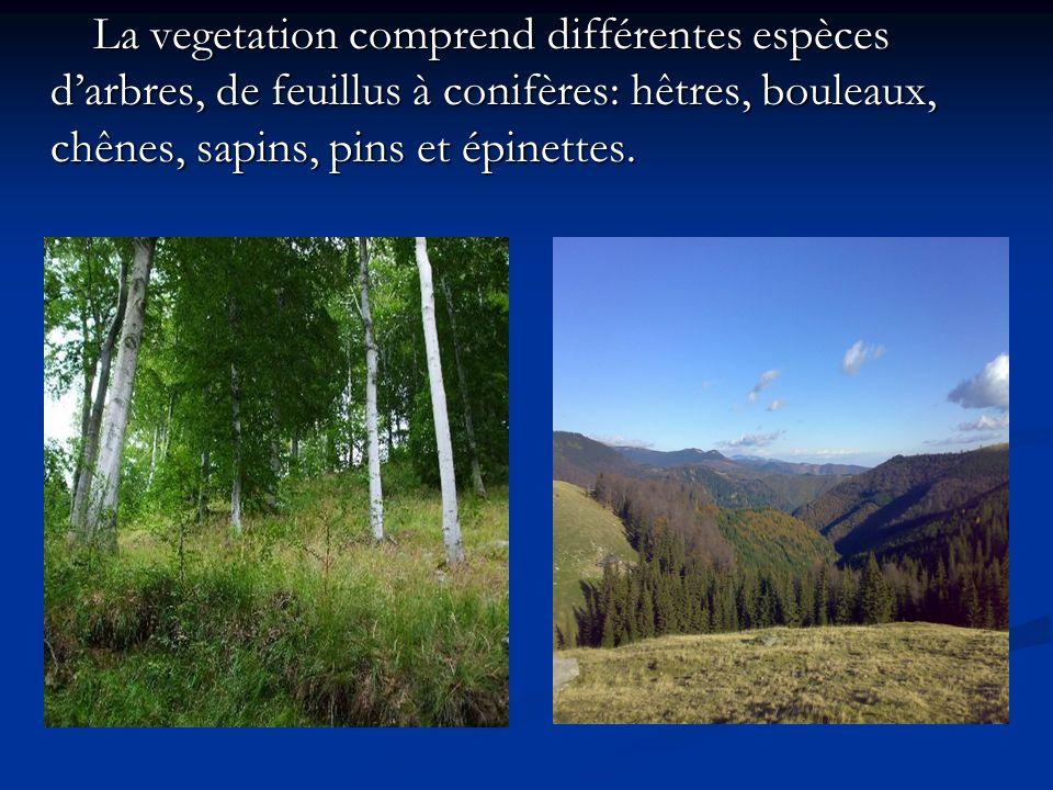 La vegetation comprend différentes espèces darbres, de feuillus à conifères: hêtres, bouleaux, chênes, sapins, pins et épinettes. La vegetation compre