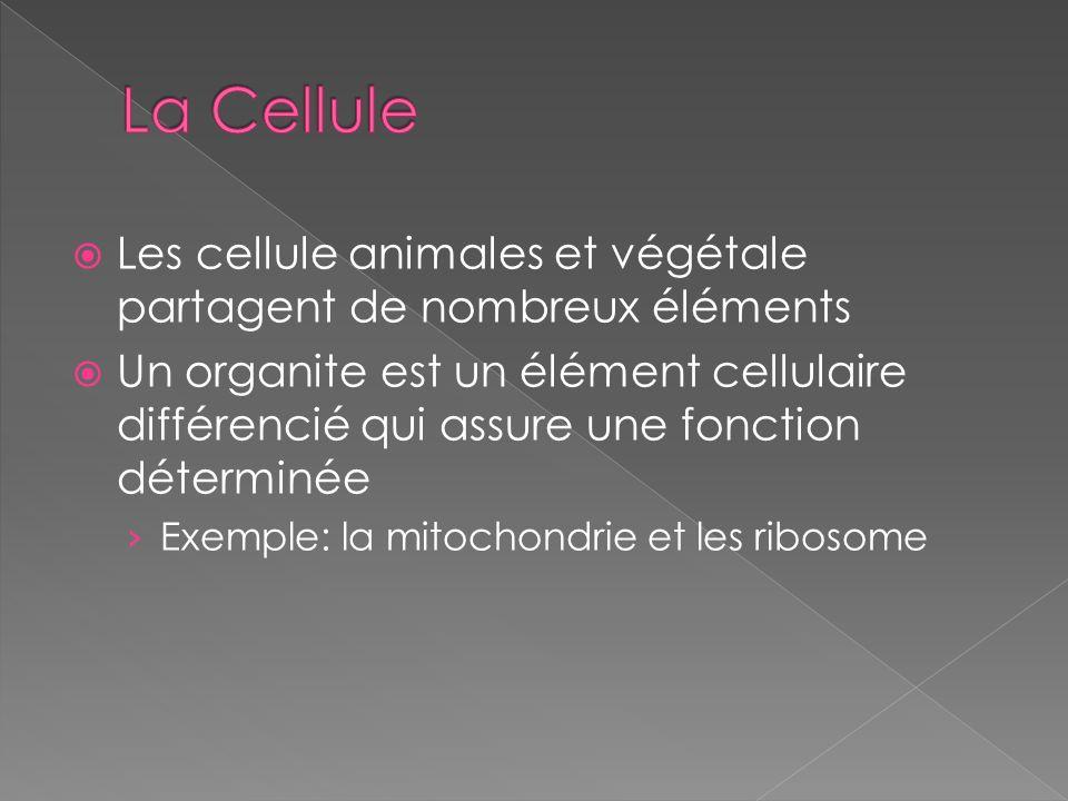 Les cellule animales et végétale partagent de nombreux éléments Un organite est un élément cellulaire différencié qui assure une fonction déterminée E