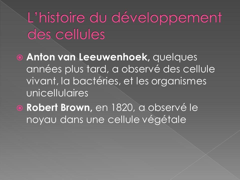Anton van Leeuwenhoek, quelques années plus tard, a observé des cellule vivant, la bactéries, et les organismes unicellulaires Robert Brown, en 1820,