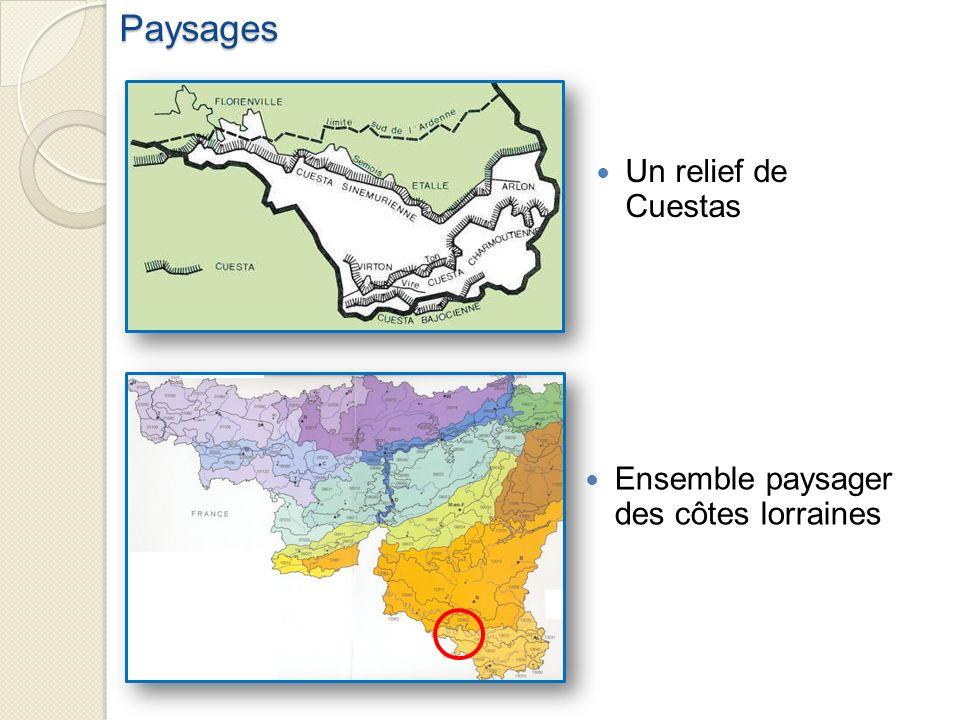 Un relief de Cuestas Ensemble paysager des côtes lorrainesPaysages