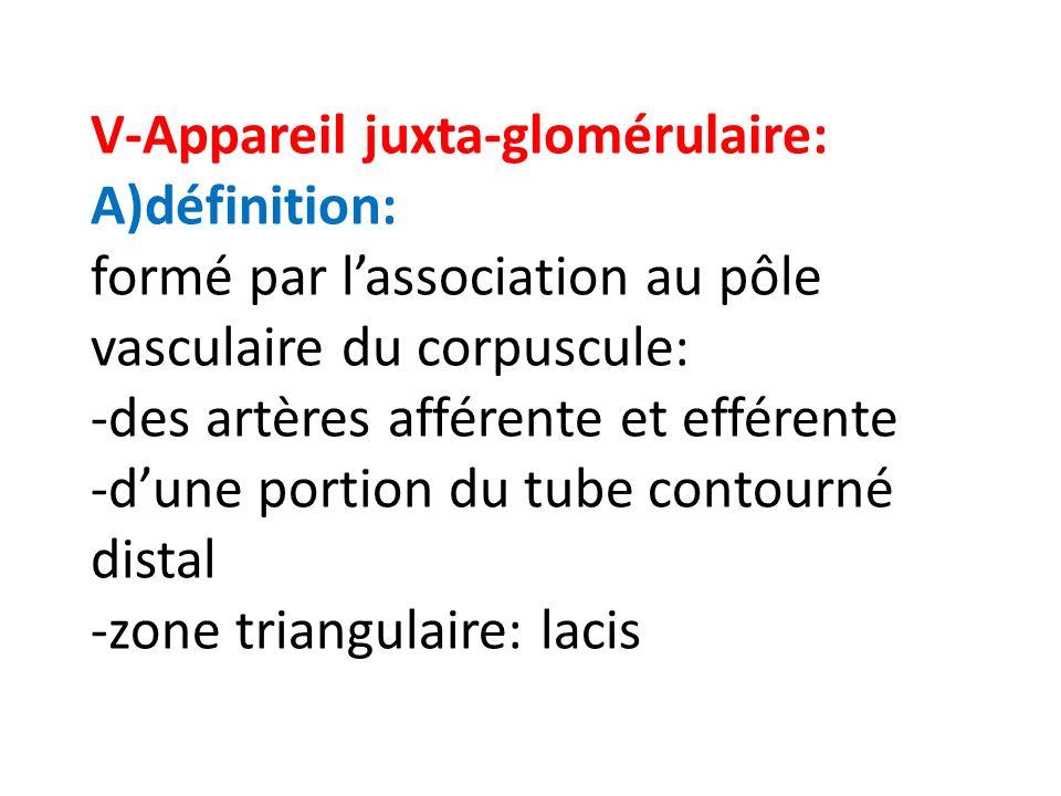 V-Appareil juxta-glomérulaire: A)définition: formé par lassociation au pôle vasculaire du corpuscule: -des artères afférente et efférente -dune portio