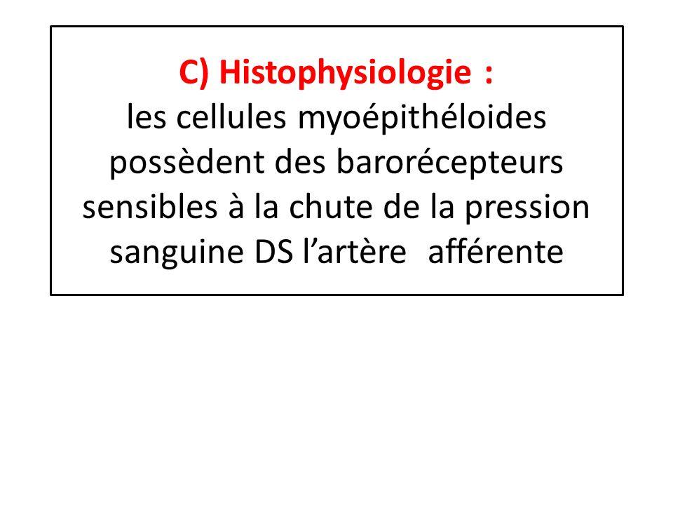 C) Histophysiologie : les cellules myoépithéloides possèdent des barorécepteurs sensibles à la chute de la pression sanguine DS lartère afférente