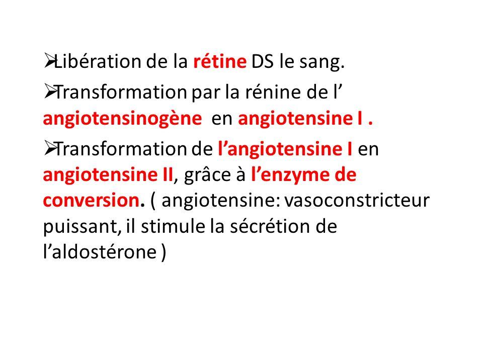 Libération de la rétine DS le sang. Transformation par la rénine de l angiotensinogène en angiotensine I. Transformation de langiotensine I en angiote