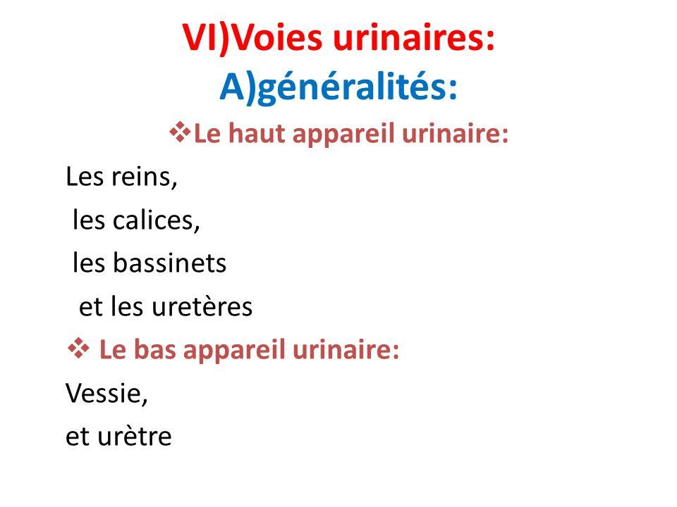 VI)Voies urinaires: A)généralités: Le haut appareil urinaire: Les reins, les calices, les bassinets et les uretères Le bas appareil urinaire: Vessie,