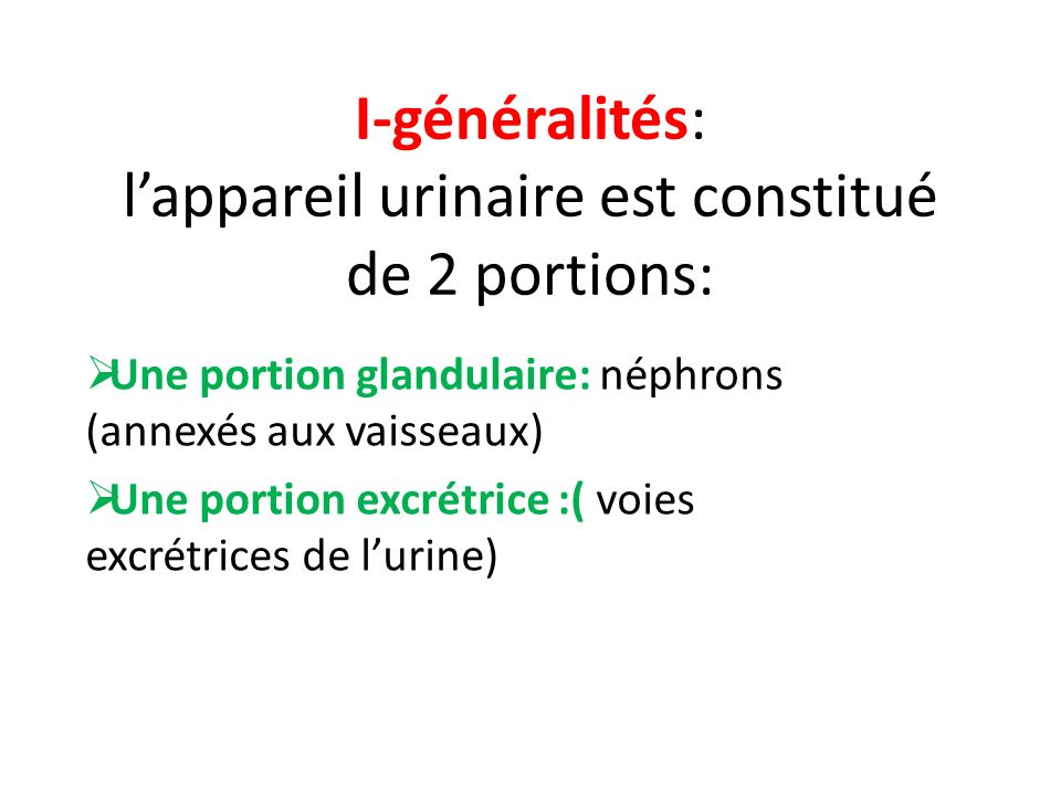 I-généralités: lappareil urinaire est constitué de 2 portions: Une portion glandulaire: néphrons (annexés aux vaisseaux) Une portion excrétrice :( voi