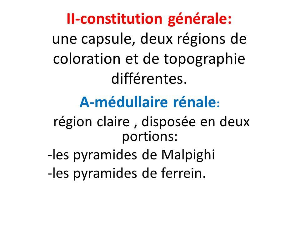 II-constitution générale: une capsule, deux régions de coloration et de topographie différentes. A-médullaire rénale : région claire, disposée en deux