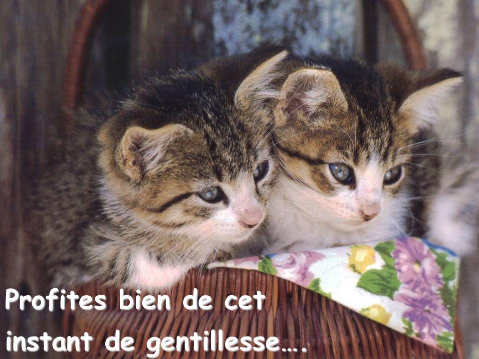 Profites bien de cet instant de gentillesse….