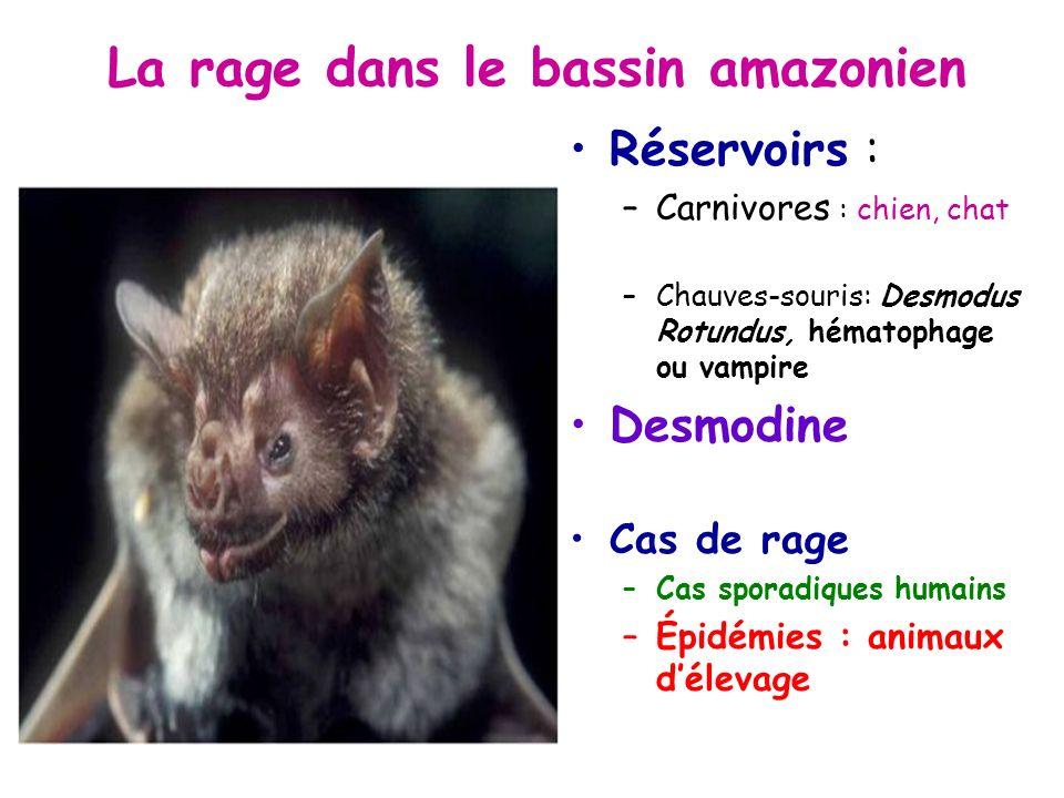 La rage dans le bassin amazonien Réservoirs : –Carnivores : chien, chat –Chauves-souris: Desmodus Rotundus, hématophage ou vampire Desmodine Cas de rage –Cas sporadiques humains –Épidémies : animaux délevage