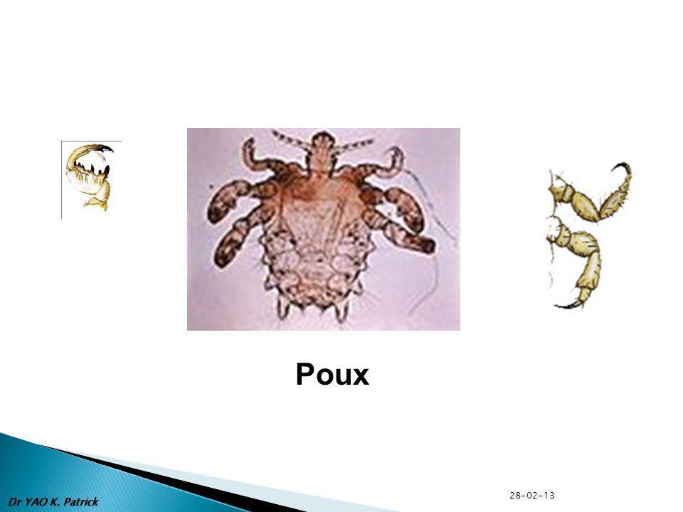 Poux Dr YAO K. Patrick 28-02-13