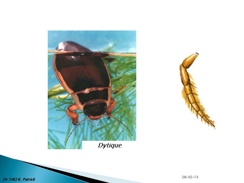 Dytique Dr YAO K. Patrick 28-02-13