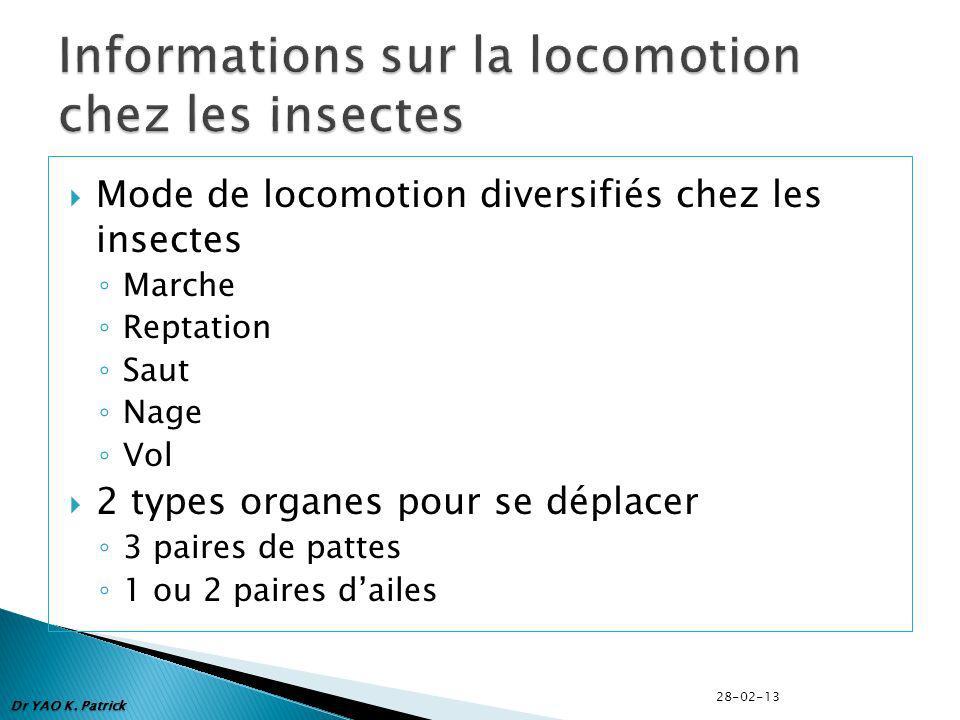 Mode de locomotion diversifiés chez les insectes Marche Reptation Saut Nage Vol 2 types organes pour se déplacer 3 paires de pattes 1 ou 2 paires dail