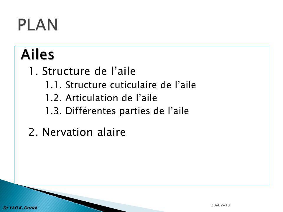 Ailes 1. Structure de laile 1.1. Structure cuticulaire de laile 1.2. Articulation de laile 1.3. Différentes parties de laile 2. Nervation alaire Dr YA