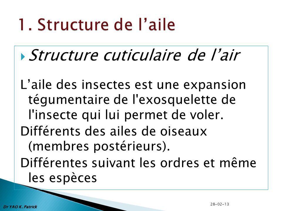 Dr YAO K. Patrick Structure cuticulaire de lair Laile des insectes est une expansion tégumentaire de l'exosquelette de l'insecte qui lui permet de vol