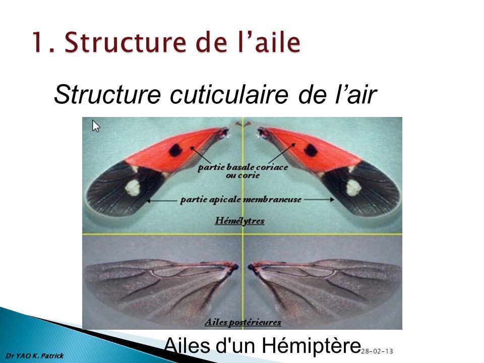 Dr YAO K. Patrick Structure cuticulaire de lair Ailes d un Hémiptère 28-02-13