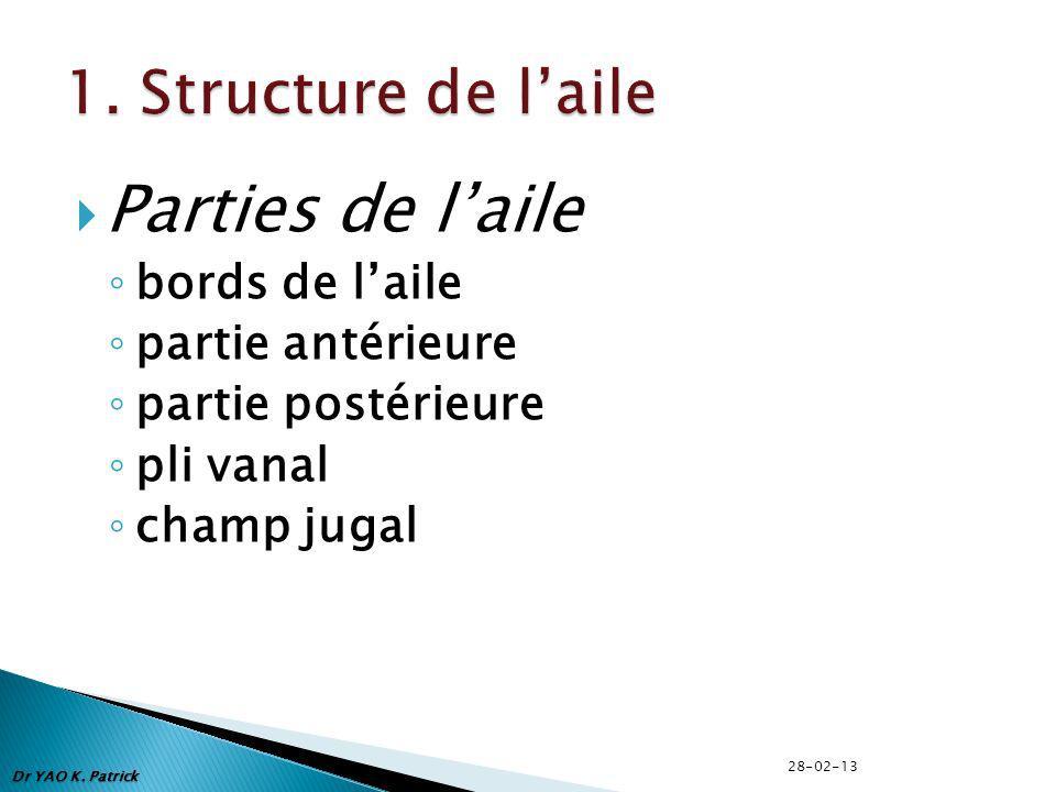 Dr YAO K. Patrick Parties de laile bords de laile partie antérieure partie postérieure pli vanal champ jugal 28-02-13