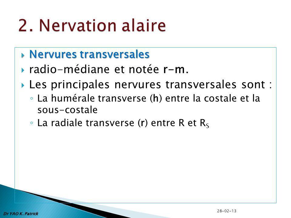 Nervures transversales Nervures transversales radio-médiane et notée r-m. Les principales nervures transversales sont : La humérale transverse (h) ent