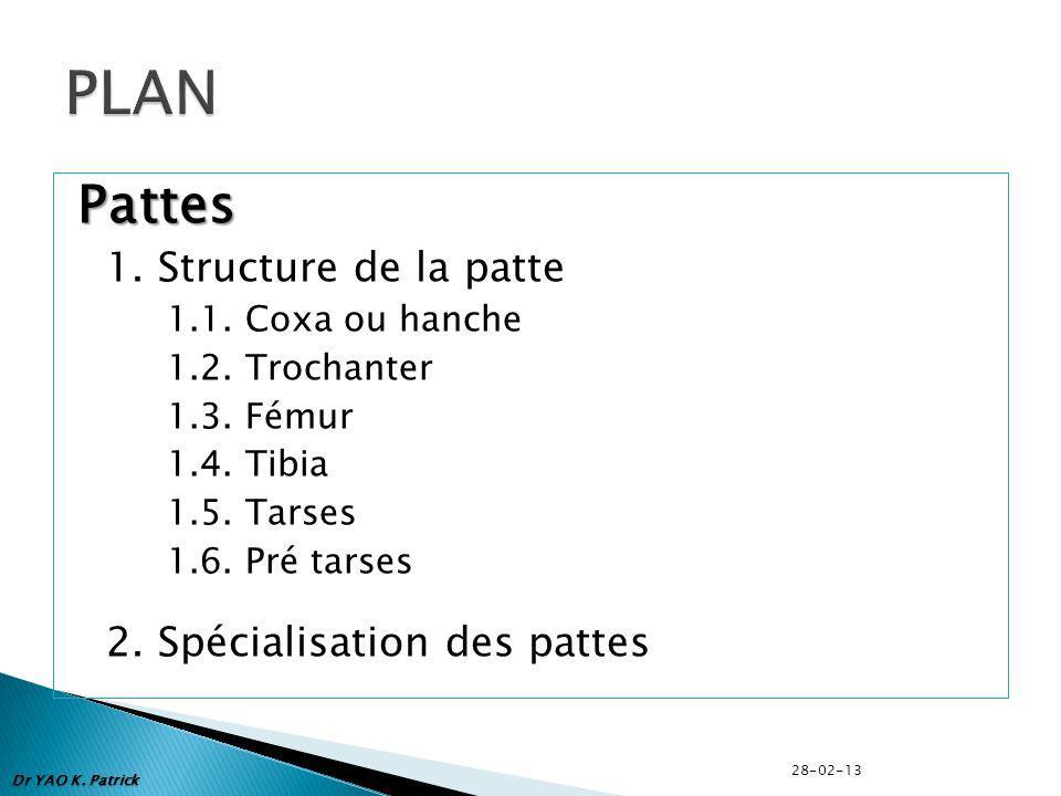 Pattes 1.Structure de la patte 1.1. Coxa ou hanche 1.2.