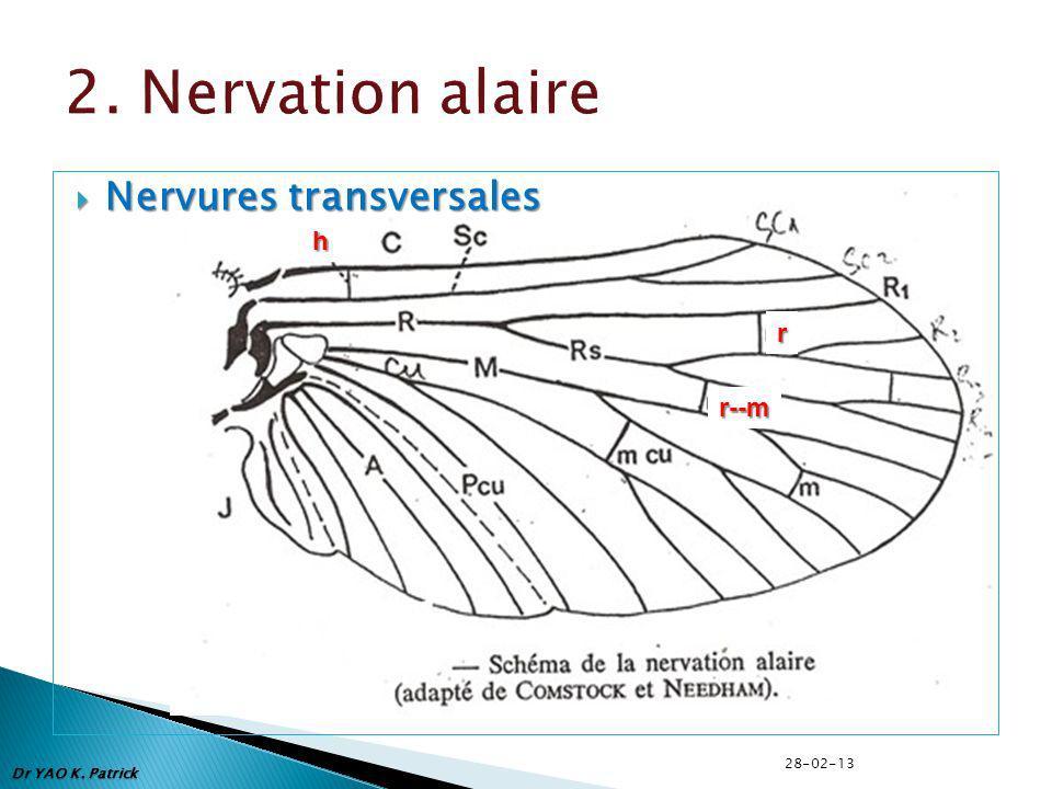 Nervures transversales Nervures transversales Dr YAO K. Patrick h r r--m 28-02-13
