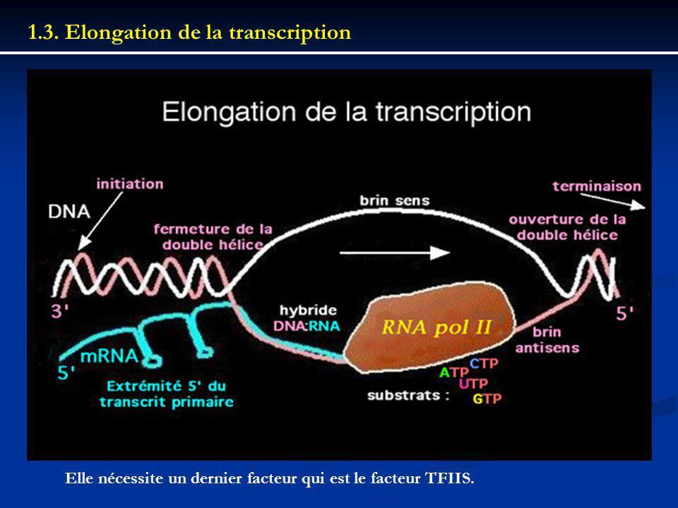 1.3. Elongation de la transcription Elle nécessite un dernier facteur qui est le facteur TFIIS.