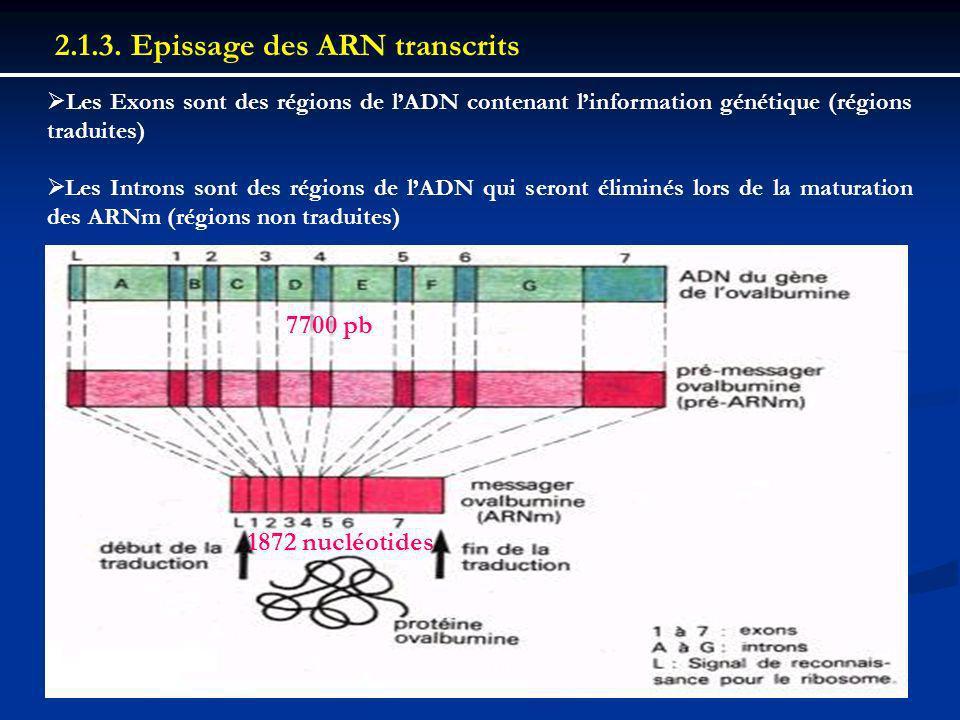 2.1.3. Epissage des ARN transcrits Les Exons sont des régions de lADN contenant linformation génétique (régions traduites) Les Introns sont des région