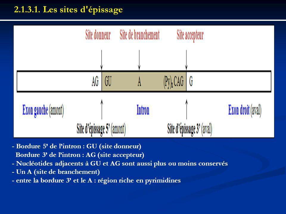 - Bordure 5 de lintron : GU (site donneur) Bordure 3 de lintron : AG (site accepteur) - Nucléotides adjacents à GU et AG sont aussi plus ou moins cons