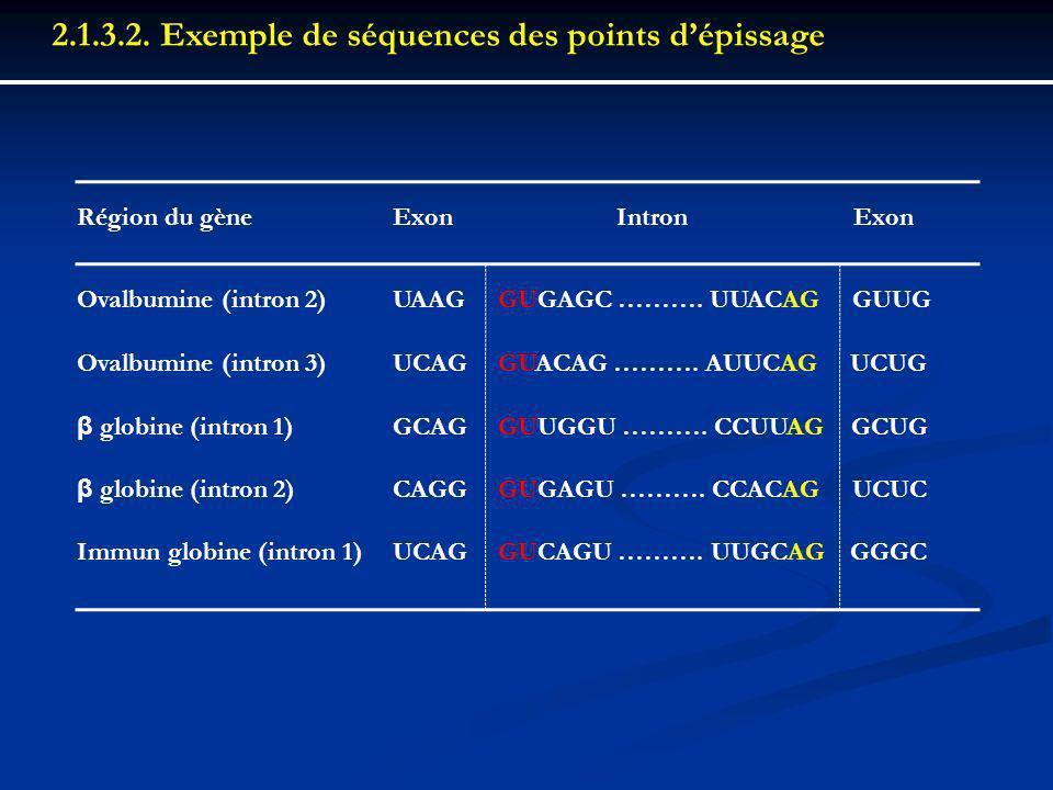 Région du gèneExon Intron Exon Ovalbumine (intron 2)UAAGGUGAGC ………. UUACAG GUUG Ovalbumine (intron 3)UCAGGUACAG ………. AUUCAG UCUG β globine (intron 1)G