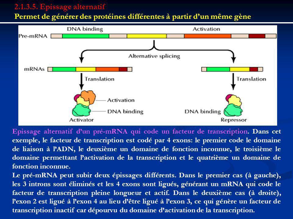 2.1.3.5. Epissage alternatif Permet de générer des protéines différentes à partir dun même gène Epissage alternatif dun pré-mRNA qui code un facteur d