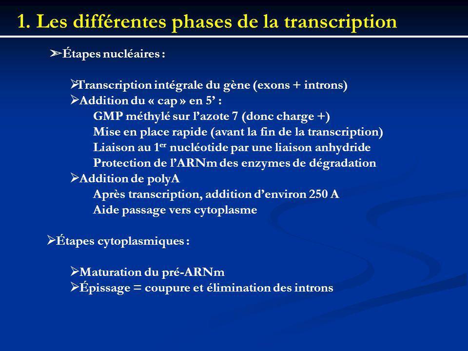 1. Les différentes phases de la transcription Étapes nucléaires : Transcription intégrale du gène (exons + introns) Addition du « cap » en 5 : GMP mét