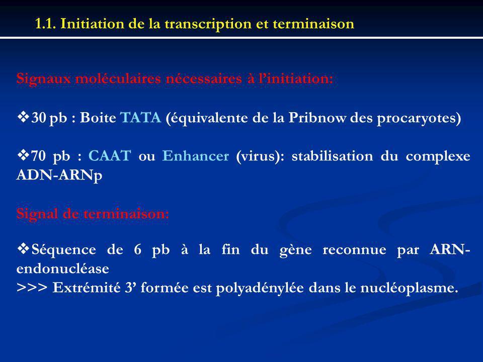 1.1. Initiation de la transcription et terminaison Signaux moléculaires nécessaires à linitiation: 30 pb : Boite TATA (équivalente de la Pribnow des p