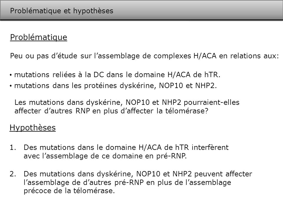 Conclusion Nos résultats démontrent que les mutations dans dyskérine, NOP10 et NHP2 reliées à la DC affectent différentes populations de RNP H/ACA en plus de la télomérase.