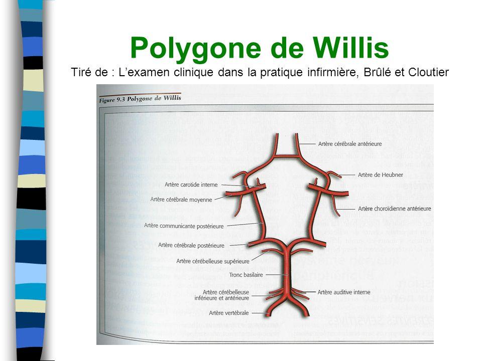 Polygone de Willis Tiré de : Lexamen clinique dans la pratique infirmière, Brûlé et Cloutier