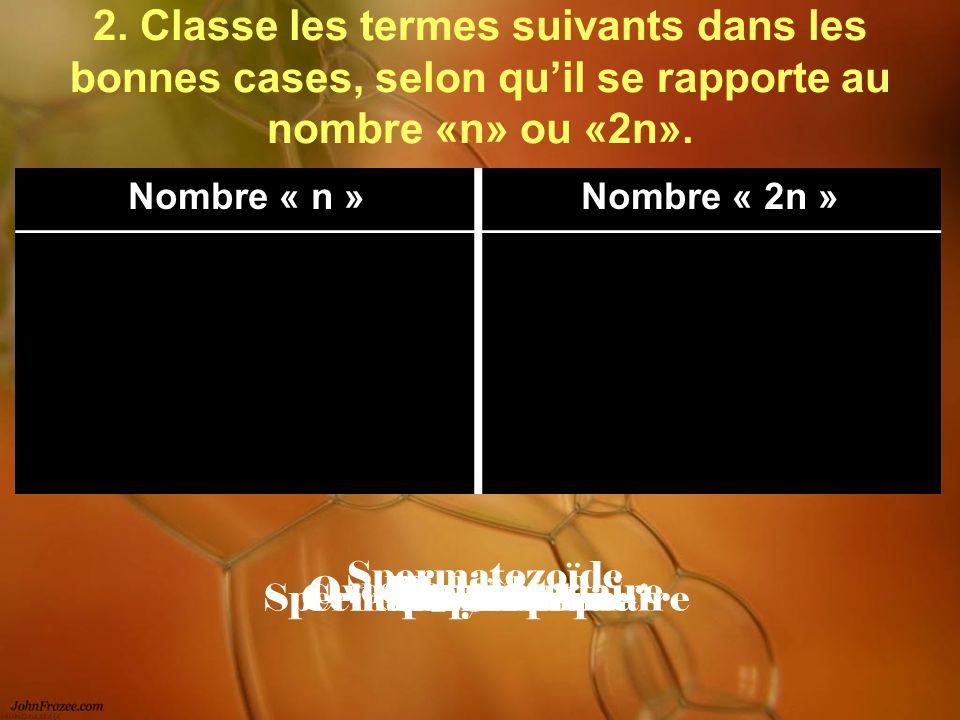 2. Classe les termes suivants dans les bonnes cases, selon quil se rapporte au nombre «n» ou «2n». Nombre « n »Nombre « 2n » Spermatocyte primaireOvul