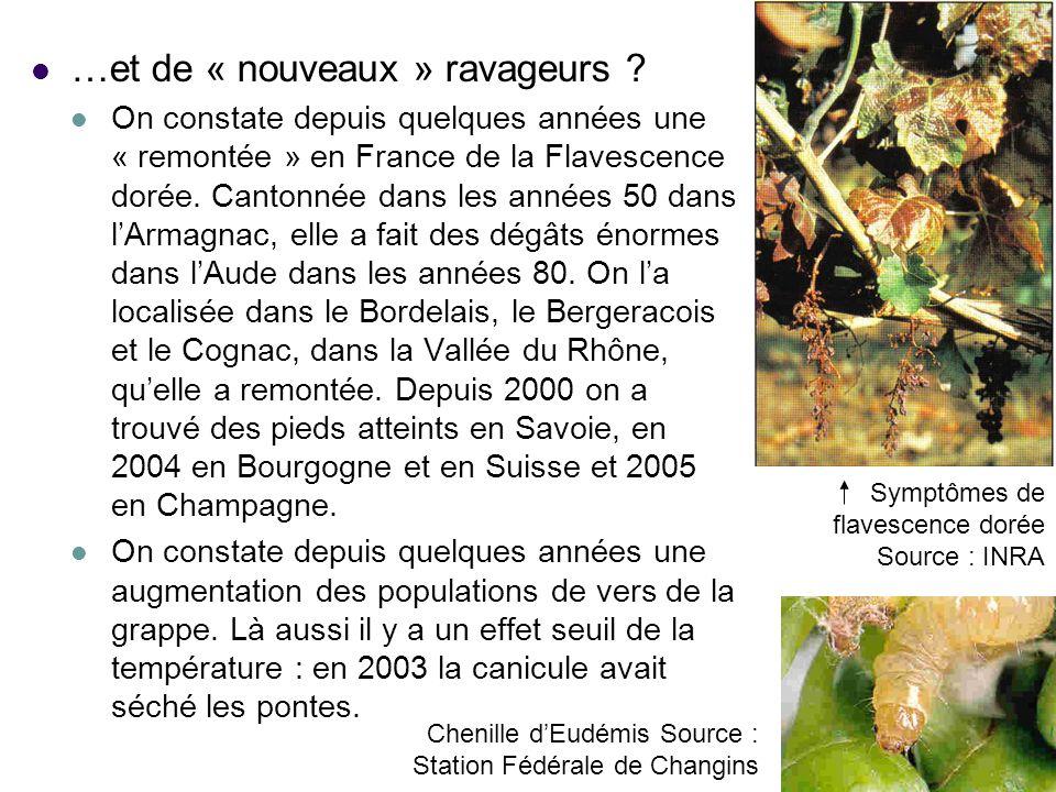 …et de « nouveaux » ravageurs ? On constate depuis quelques années une « remontée » en France de la Flavescence dorée. Cantonnée dans les années 50 da