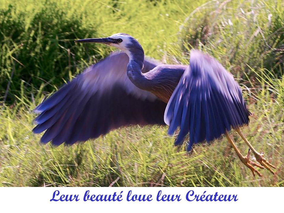 My friend stole my sweetheart from me Tous se reproduisent selon leur espèce….