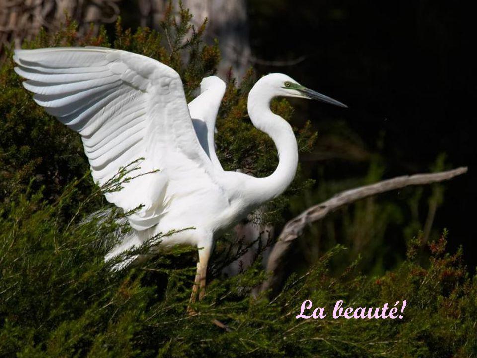The beautiful Tennessee Waltz La beauté!