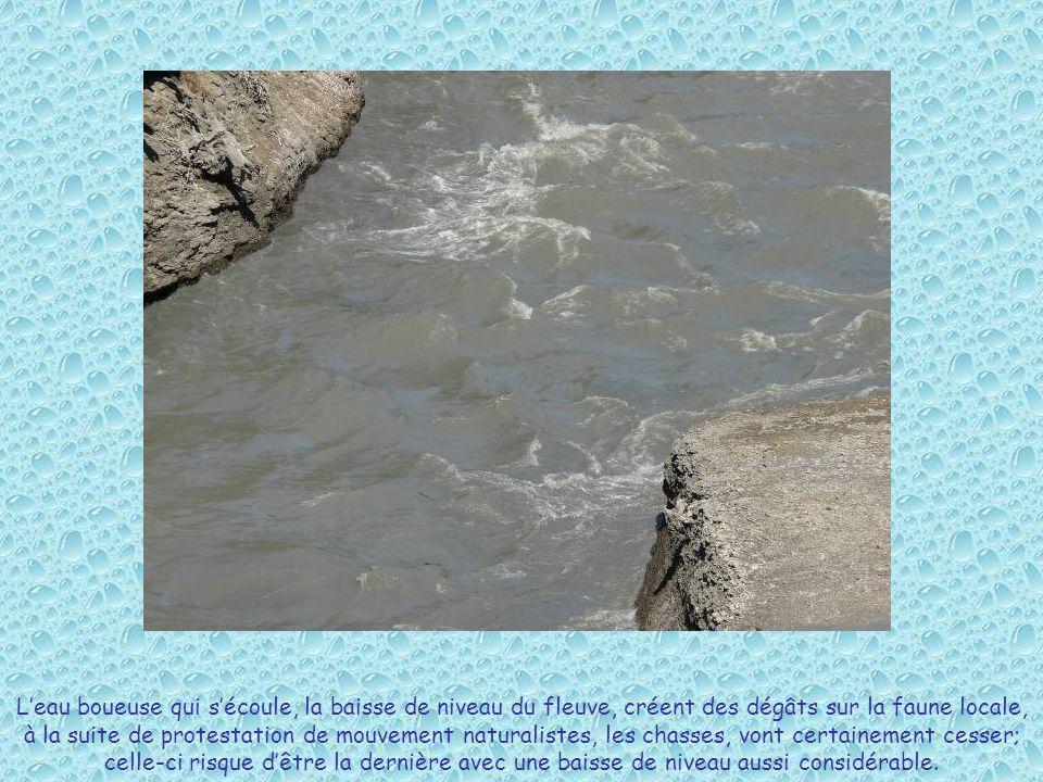 Leau boueuse qui sécoule, la baisse de niveau du fleuve, créent des dégâts sur la faune locale, à la suite de protestation de mouvement naturalistes,