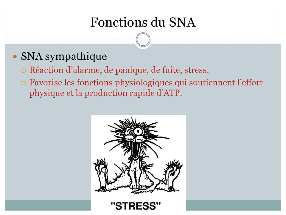 Fonctions du SNA SNA sympathique Réaction dalarme, de panique, de fuite, stress.