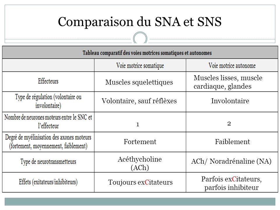 Comparaison du SNA et SNS Muscles squelettiques Muscles lisses, muscle cardiaque, glandes Volontaire, sauf réflèxesInvolontaire 1 2 FortementFaiblement Acéthycholine (ACh) ACh/ Noradrénaline (NA) Toujours exCitateurs Parfois exCitateurs, parfois inhibiteur