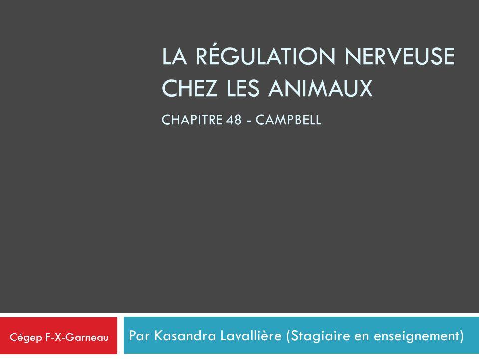 LA RÉGULATION NERVEUSE CHEZ LES ANIMAUX Par Kasandra Lavallière (Stagiaire en enseignement) CHAPITRE 48 - CAMPBELL Cégep F-X-Garneau