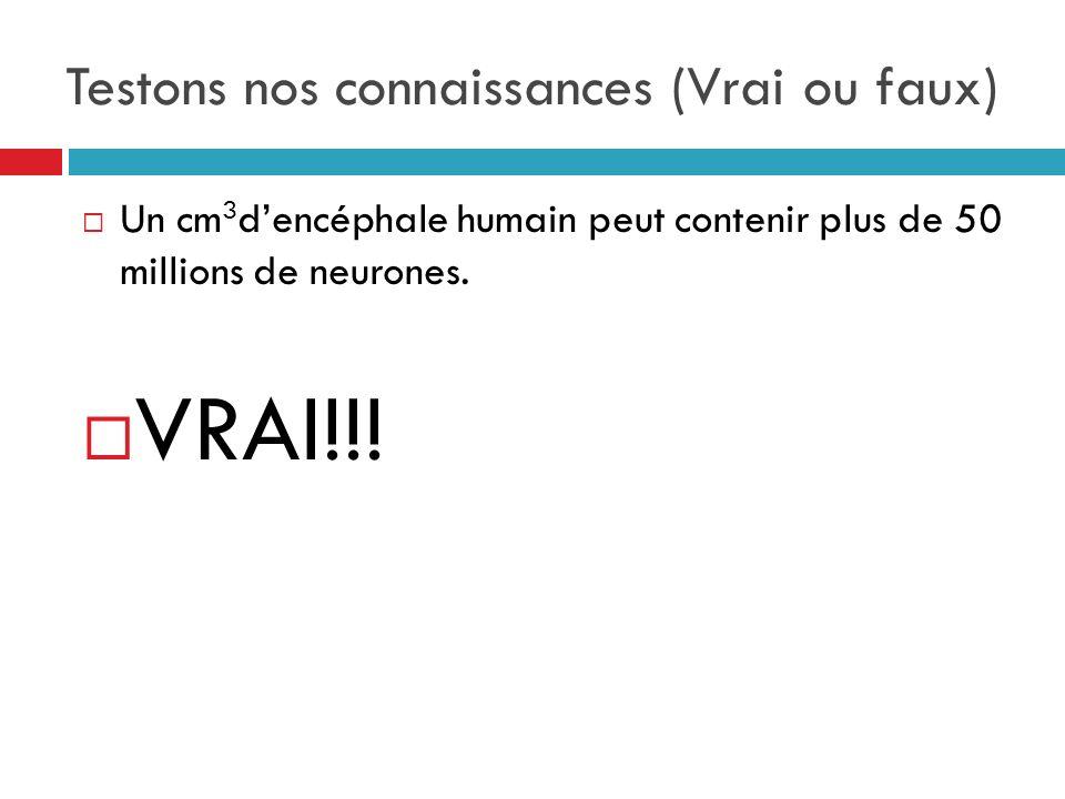 Testons nos connaissances (Vrai ou faux) Un cm 3 dencéphale humain peut contenir plus de 50 millions de neurones.