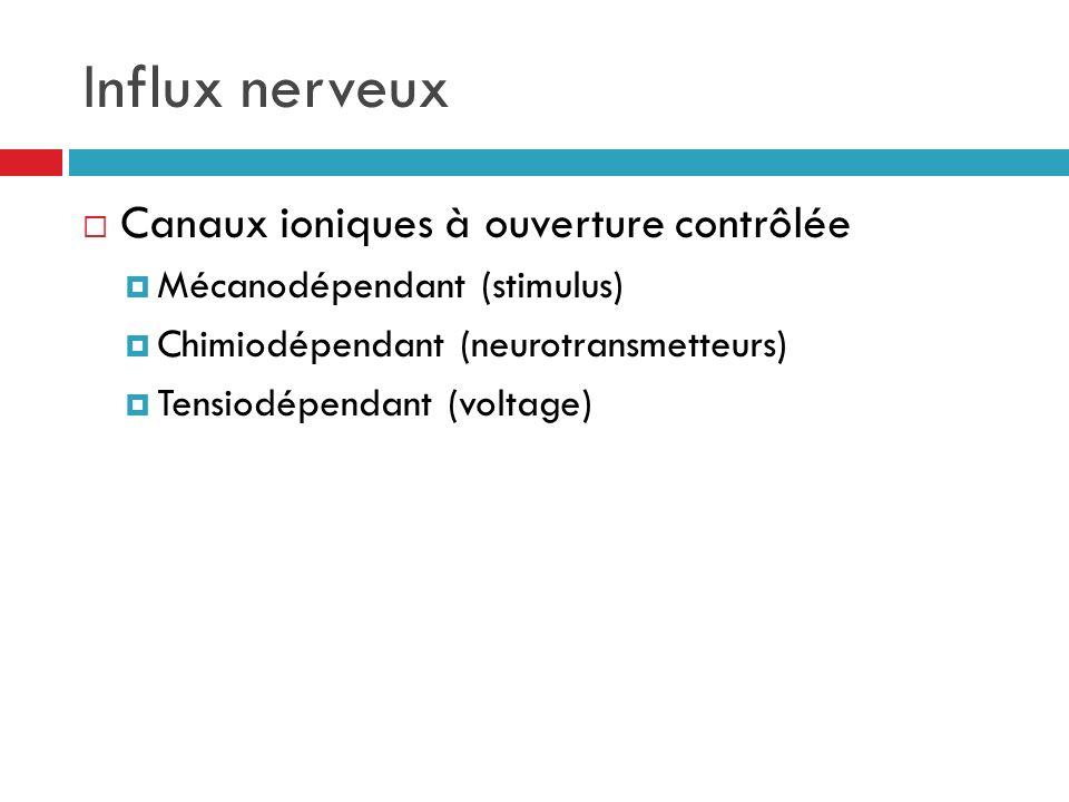 Influx nerveux Canaux ioniques à ouverture contrôlée Mécanodépendant (stimulus) Chimiodépendant (neurotransmetteurs) Tensiodépendant (voltage)