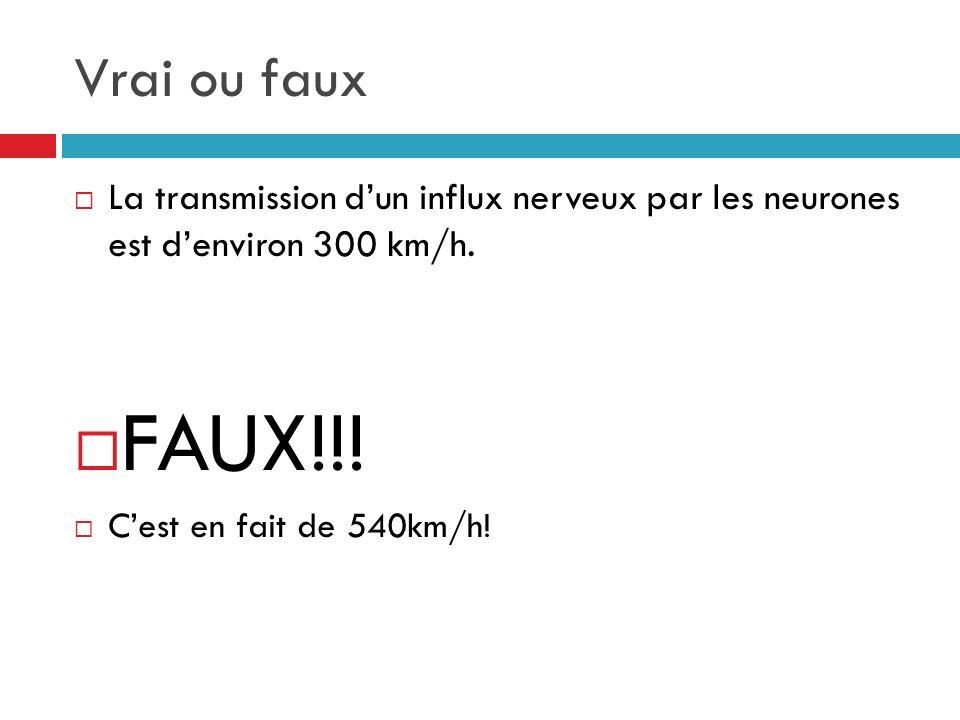 Vrai ou faux La transmission dun influx nerveux par les neurones est denviron 300 km/h.